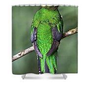 Female Resplendent Quetzal - Dp Shower Curtain