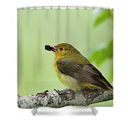 Female Summer Tanager Shower Curtain