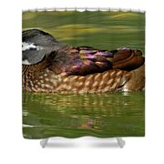 Female Wood Duck Shower Curtain