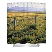 Fence And Barley Crop, Near Waterton Shower Curtain