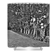 Fence Of Trees Shower Curtain
