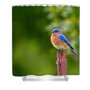 Fence Post Bluebird Shower Curtain