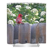 Fence Top Shower Curtain