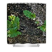 Fern And Coquina Shower Curtain