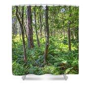 Fern Forest Shower Curtain