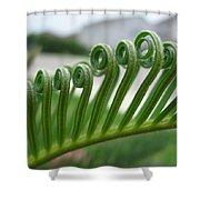 Fern Fronds Macro Shower Curtain
