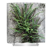 Fern Growing From Crack In Limestone Shower Curtain