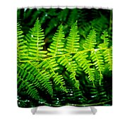 Fern II Shower Curtain