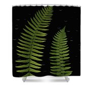 Fern Leaves With Water Droplets Shower Curtain