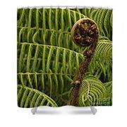 Fern Palm New Zealand Shower Curtain