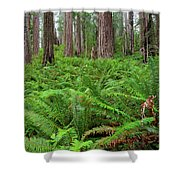 Ferns And Redwoods Shower Curtain