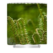 Ferns Fiddleheads Shower Curtain