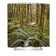 Ferns Sit On The Forest Floor Shower Curtain