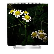 Feverfew In Bloom Shower Curtain
