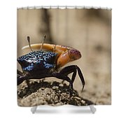 Fiddler Crab Living In A Sandy Tidal Shower Curtain