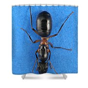 Field Ant Shower Curtain