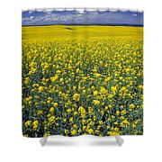 Field Of Canola Shower Curtain