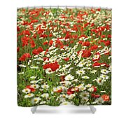 Field Of Daisies And Poppies. Shower Curtain