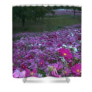 Field Of Flowers Along The Highway  Shower Curtain