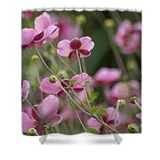 Field Of Japanese Anemones Shower Curtain