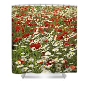 Field Of Poppies And Daisies In Limagne  Auvergne. France Shower Curtain