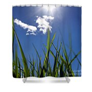 Field Of Wheat In Limagne. Auvergne. France. Europe Shower Curtain