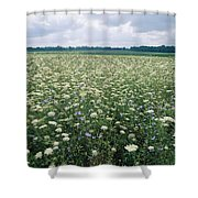 Field Of Wildflowers, Montezuma Shower Curtain