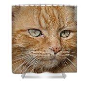 Fierce Warrior Kitty Shower Curtain