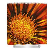 Fiery Passion Shower Curtain