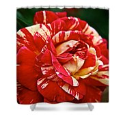 Fiesta Rose Shower Curtain