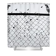 Fight Among Our Wings Shower Curtain
