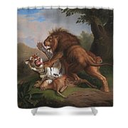 Fight Of A Lion With A Tige Shower Curtain