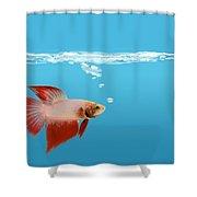 Fighting Fish Under Water Shower Curtain