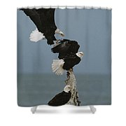 Fighting For A Space, A Northern Shower Curtain
