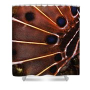 Fin Of A Scorpionfish, Indonesia Shower Curtain