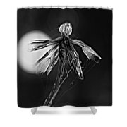 Finale Bw Shower Curtain