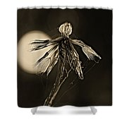 Finale Sepia Shower Curtain