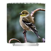 Finch In An Ice Storm Shower Curtain
