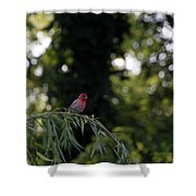 Finch In The Willow Shower Curtain