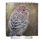 Finch Low Saturation Shower Curtain