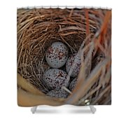 Finch Nest With Eggs  Shower Curtain