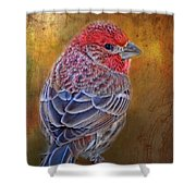 Finch With Gold Texture Shower Curtain