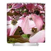 Fine Art Prints Pink Dogwood Flowers Shower Curtain