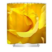 Fine Art Prints Yellow Rose Flower Shower Curtain