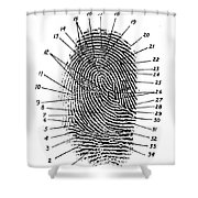 Fingerprint Diagram, 1940 Shower Curtain