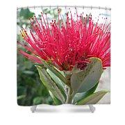 Fiore Rosso E Grasso Shower Curtain