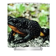 Fire-bellied Frog Atelopus Ignescens Shower Curtain