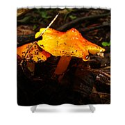 Fire In The Forest - Hygrocybe Cuspidata Shower Curtain