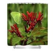Firebush Shower Curtain