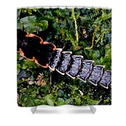 Firefly Larva Shower Curtain